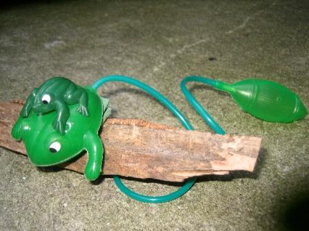 Grenouille sauteuse