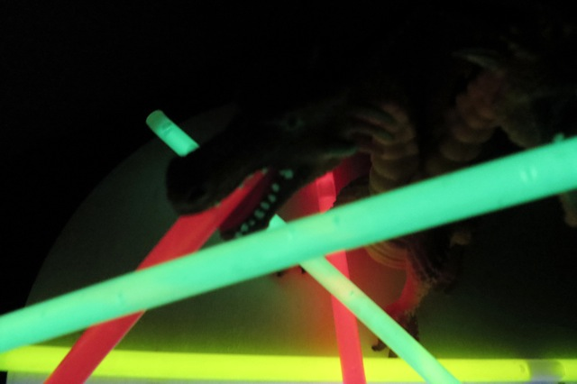 dragon fluo