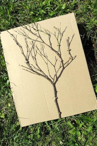 arbre nu