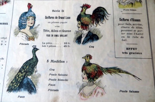 coiffures oiseaux