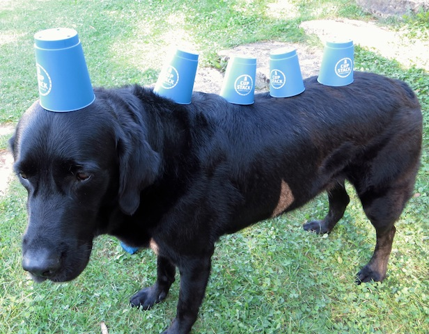 Cups chien