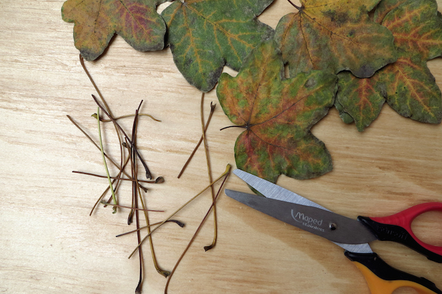 feuilles ciseaux