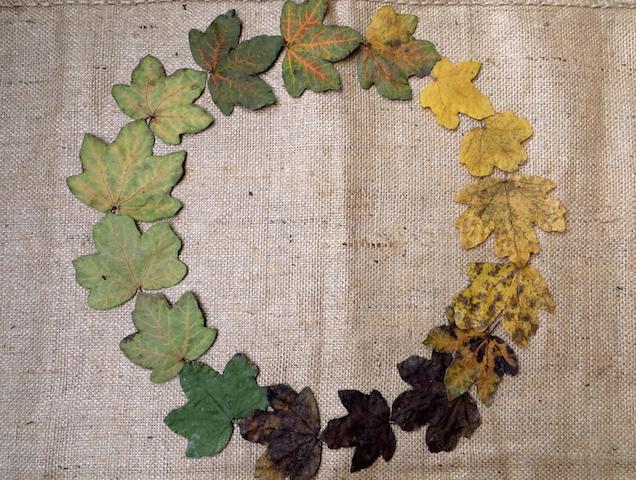 tourbillon feuilles