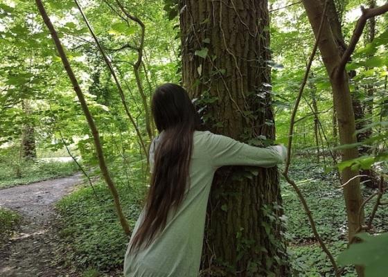 jeu arbre