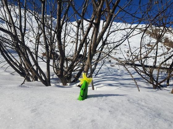 monsieur farine neige